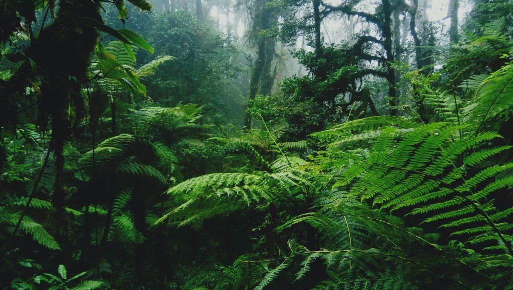 jardins forêts en indonésie