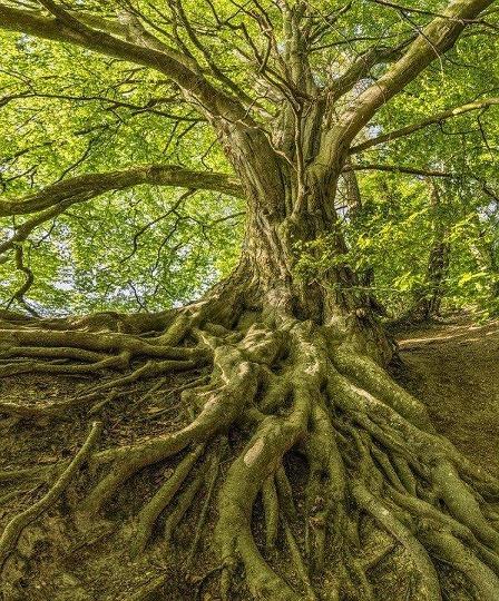 les racines des arbres vont désagréger la roche mère
