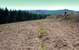 Voici une photo publiée par Autun-Morvan Écologie, une des nombreuses associations qui se bat pour protéger les forêts naturelles du massif de l'industrie forestière.