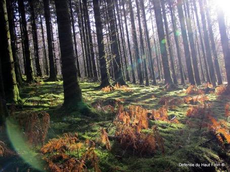 Forêt avec son sol couvert de mousse, et donc de biodiversité
